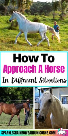 Approaching a horse can feel intimidating. They are big animals that are able to move quickly and can sometimes be unpredictable. When a horse is loose you may feel nervous from the lack of control... Click the link to read the rest of the post!#handlinghorses #leadinghorse #approachinghorse #goinguptohorse #stayingsafearoundhorses #beginnerequestrian #horseriding #horsebackriding #beginnerhorserider #horsebackridingtips #horseridingtips #learningtoridehorses Horseback Riding Tips, Horse Riding Tips, Prey Animals, Big Animals, Equestrian, Rest, Horses, Link, Horse Tips