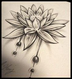 Lotus Seed by KingsArt-1.deviantart.com on @deviantART