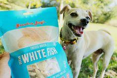 Healthy Dog Treats from @grandmalucys !!! :)
