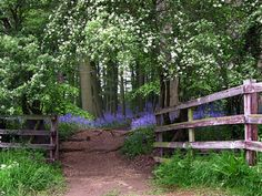 any beautiful bluebell woods / fields !!!