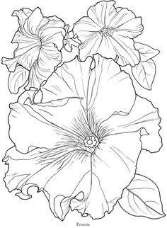 In voller Blüte: Ein close-up-Malbuch 5575
