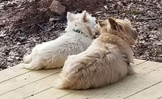 Life is better with a friend by your side. Baby Dogs, Doggies, Dogs And Puppies, Cairn Terriers, Terrier Dogs, Puppy Mill Rescue, Cutest Dogs, Fluffy Cat, Dog Paws