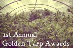 1st Annual Golden Tarp Award | Calling All Cultivators | Humboldt Cannabis Competition Now Accepting Light Deprivation Entrants