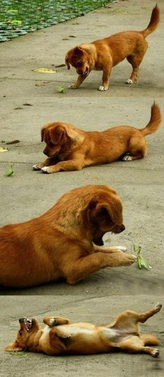 Puppy making friends with a Praying Mantis