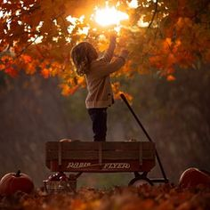 Radio Flyer by Jake Olson Studios Photography Radio Flyer, Fall Pictures, Fall Photos, Autumn Day, Autumn Leaves, Maple Leaves, Autumn Girl, Winter, Autumn Nature
