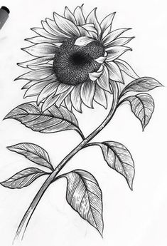 Drawing, sunflower art, sunflower tattoos, simple pencil drawings, pencil a Pencil Drawings Of Flowers, Pencil Art Drawings, Easy Drawings, Drawing Sketches, Sunflower Sketches, Sunflower Drawing, Sunflower Art, Sunflower Tattoo Small, Sunflower Tattoos