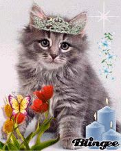 Download Animated 176x220 «маленький принц» Cell Phone Wallpaper. Category: Pets & Animals