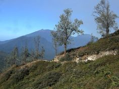 The crater of Mount Ijen can only be reached by foot. Besides a view of biodiversity, if lucky, tourists can also catch ...