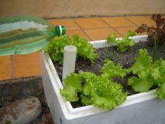 Eden's Garden Space - Mini Hortas: Sistema de Irrigação