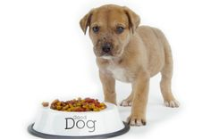 Pet Nutrition: Life Stages - Dogs and Cats Have Different Needs