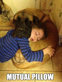How to become a good pillow