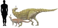 """1.Scelidosaurus harrisonii (""""limb lizard"""") 1861 Chordata/Ornithischia/Scelidosauridae. 2.Scutellosaurus lawleri (""""little shielded lizard"""") 1981 Chordata/Ornithischia."""