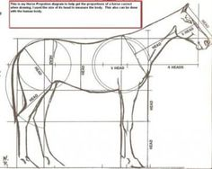 Horse proportion diagram for drawing horses Horse Drawings, Animal Drawings, Art Drawings, Horse Tail, Horse Head, Drawing Lessons, Drawing Techniques, Animal Sketches, Art Sketches