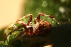 Spider!  BoomDealer.com