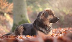 Training portrait with Lucy on a beautiful winter morning with a lovely soft light :) If you like my macro images landscape / seascape images or portraits/dog portraits stay in touch :) I wish you all a wonderful day :)
