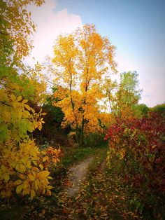 Autumn Trail Art Print by Kay Novy. All prints are professionally printed, packaged, and shipped within 3 - 4 business days. Choose from multiple sizes and hundreds of frame and mat options.