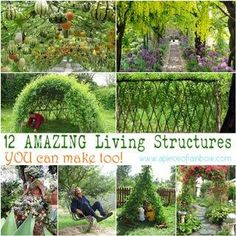 Tutorials and ideas on how to create magical living structures such as grape tunnel, bean teepee, grass sofa, willow dome, living fence, and much more!