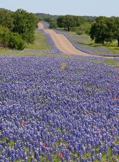 Because spring means bluebonnet-lined roads as far as the eye can see. | 27 Reasons Living In Texas Ruins You For Life