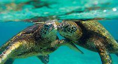 Clark Little Photography, Hawaii | Official Site