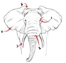 Image result for elephant face drawing