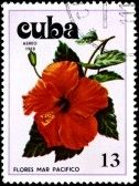 CUBA - CIRCA 1978 A Postage Stamp Shows Flowers of the Pacific Ocean, circa 1978 stock photography