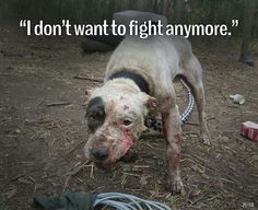 Please!! Be their voice help end animal abuse... if u hear it, see it , suspect it...REPORT IT.  PLEASE!!!