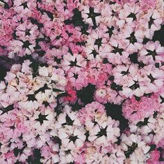 Beautiful flowers I'm so lucky to see every time I go for a walk 🌸