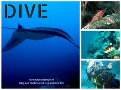 dive.mauricedeboer.nl  On my dives, the photo's and the DIY projects