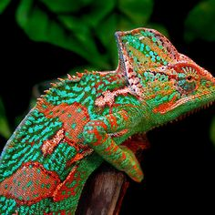 ~~ Multiple Personality Disorder ~ chameleon by Bobby McLeod~~