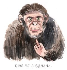 Rise of the Planet of the Apes: A Response. Lisa Hanawalt is amazing.