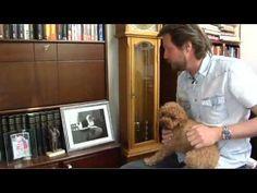 Et portrett av suksessforfatter Tom Egeland.