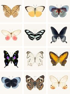 "Affordable Art Print Set - Mini Portfolio ""Butterflies"" from Rocky Top Studio"