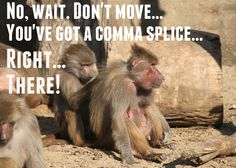 Even monkeys care about proper grammar!