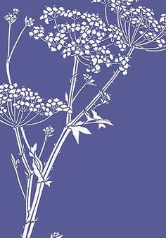 Giant Hogweed Queen Anne's Lace Stencil- ++lines, could work as a backdrop?