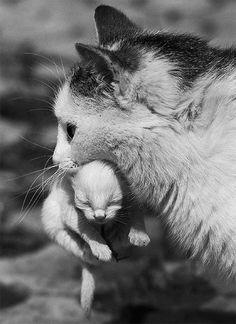 Mama cat & baby kitten