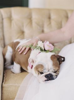 Sleepy pup: http://www.stylemepretty.com/virginia-weddings/keswick/2016/06/21/glamorous-virginia-wedding/   Photography: Michael And Carina Photography - http://michaelandcarina.com/