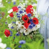 Celebrate Britain Flower Mix