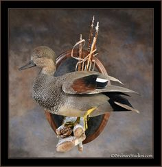 Birdman Studios Waterfowl Taxidermy * Upland & Bird ...