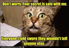 funny cat pictures - Don't worry. Your secret is safe with me.