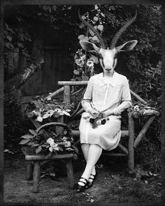 'Gazelle' photographic print, from Grand Ole Bestiary on Etsy.
