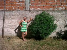 Weed in Argentina