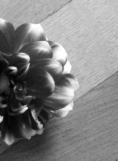 Flower.  03/10/2015 S