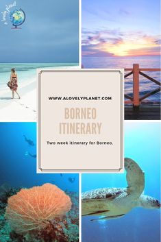 Borneo Itinerary – Two Weeks In Malaysian Borneo – A Lovely Planet A two week itinerary for Borneo that includes diving, wildlife, route, accommodation and transport. Borneo Travel, Malaysia Travel, Asia Travel, Amazing Destinations, Travel Destinations, Travel Tips, Travel Ideas, Semporna, Island Resort