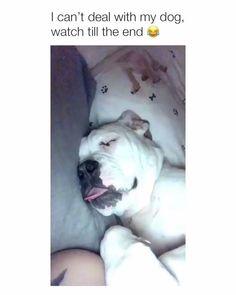 Funny Dog Memes, Funny Dog Videos, Funny Animal Memes, Funny Animal Pictures, Cute Funny Animals, Cute Baby Animals, Funny Cute, Funny Dogs, Haha Funny