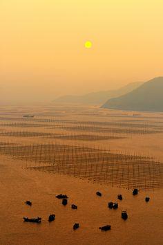 Sunset Seaweed Farming in Fujian Province, China