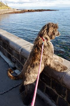 Maggie looking for fish