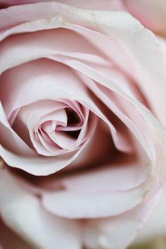 Good Morning, lovely ladies! I hope you have a wonderful day,blessed by God! Xoxoxo  ---- NatureRosesCollection | RosamariaGFrangin || Kate Holstein