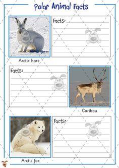 Teacher's Pet - Polar Animal Fact Files - Premium Printable Classroom Activities and Games - EYF Animal Fact File, Animal Facts For Kids, Animal Activities For Kids, Eyfs Activities, Classroom Activities, Arctic Habitat, Polar Animals, Polar Bear, Carnival Of The Animals