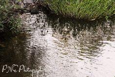Creek Side #photo #photography #photoart #photoblog #ThePhotoHour #PNEPhotography #creek #creekside #water