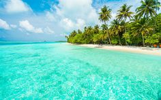 Download wallpapers tropical island, beach, summer travel, blue lagoon, palm trees, sand
